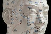 Acupunctuur hoofd model — Stockfoto