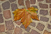 Autumnal painted leaf on cobblestone — Stock Photo