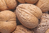 Close-up of walnuts. — Stock Photo