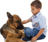 Liten pojke med stor hund — Stockfoto