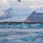 Чайка летит над Ёкюльсаурлоун ледниковой лагуны — Стоковое фото