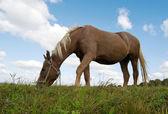 Paard schaafwonden — Stockfoto