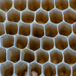 Bee honeycombs — Foto de stock #7808870