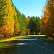Autumn road. - Stock Photo