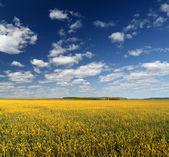 Landscape. — Stock fotografie