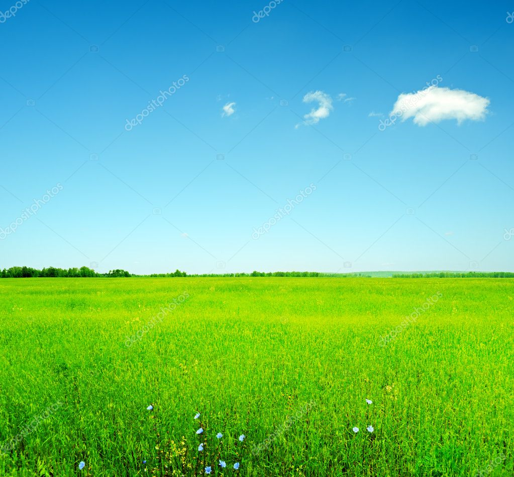 Summer landscape. Sky and green grass.   Stock Photo #7411617