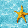 Starfish — Stock Photo #7422738