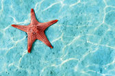 Starfish — Foto de Stock