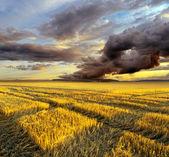 Herfst landschap — Stockfoto