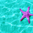 Starfish — Stock Photo #7799548