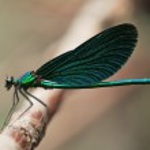 Dragonfly — Stock Photo #7157396