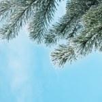 Pine — Stock Photo #7158308