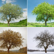 Tree — Stock Photo #7159411