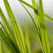 Grass — Stock Photo #7159468
