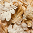 Aging oak leaf close up — Stock Photo