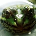 Frog — Stock Photo #7159710