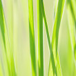 Grass — Stock Photo #7159834
