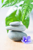 Spa concept with stone and flower — Stock Photo