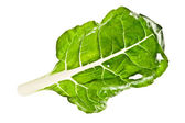 Bok choy leaf isolated on white — Stock Photo