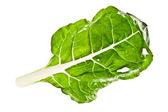 Bok choy leaf isolated on white — Stock Photo
