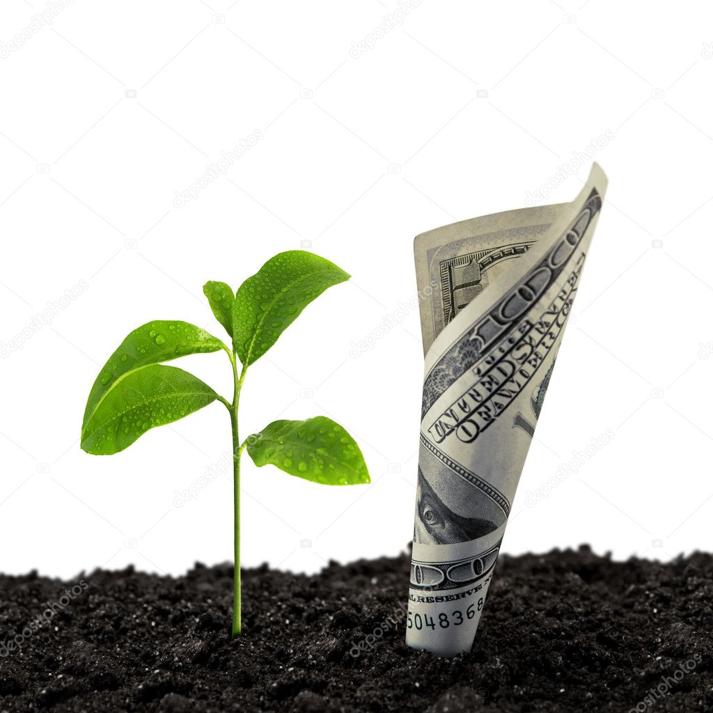 Dollar note and plant isolated — Stock Photo #7157355