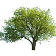 Tree — Stock Photo #7160402