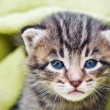 Kitten — Stock Photo #7160418
