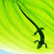 Lizard — Stock Photo #7160720