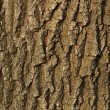 Bark — Stock Photo #7188346