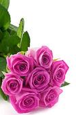 Rosa rosor — Stockfoto