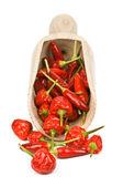 Peperoni — Foto Stock