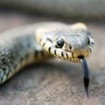 serpent — Photo