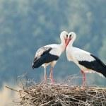 Stork — Stock Photo #7233205