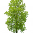 Tree — Stock Photo #7233580