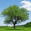 Tree — Stock Photo #7233598