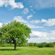 Tree — Stock Photo #7233861