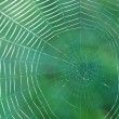 Web on green background closeup — Stock Photo #7234041