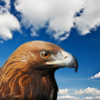 Eagle — Stock Photo #7234369