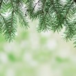 Frame from fir tree closeup — Stock Photo