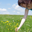 Girl collect flower on meadow — Stock Photo