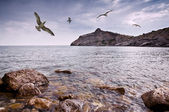 Seagull — Стоковое фото