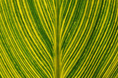 лист — Стоковое фото