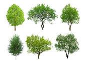 δέντρο — Φωτογραφία Αρχείου