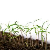 種子 — ストック写真