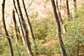 Twigs — Stock Photo