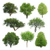 树 — 图库照片