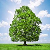 Drzewo genealogiczne — Zdjęcie stockowe