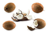 Five coco on white background — Stock Photo