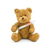 Teddy — Stock fotografie