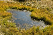 Bog_closeup — Stock Photo